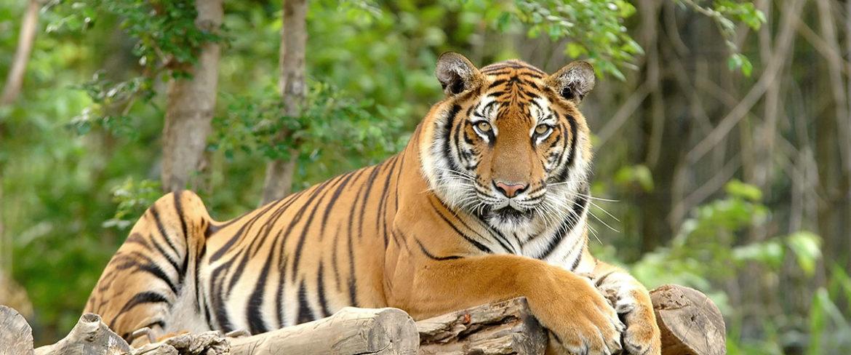 Zoos & Wildparks, beliebtes Ausflugsziel im Salzburger Land